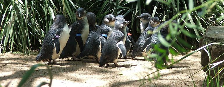 神仙小籃企鵝